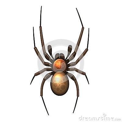 Free Spider Royalty Free Stock Photography - 35751517