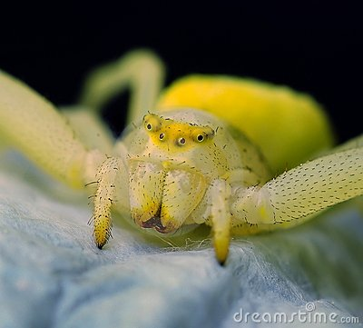 Free Spider Royalty Free Stock Photos - 9606248
