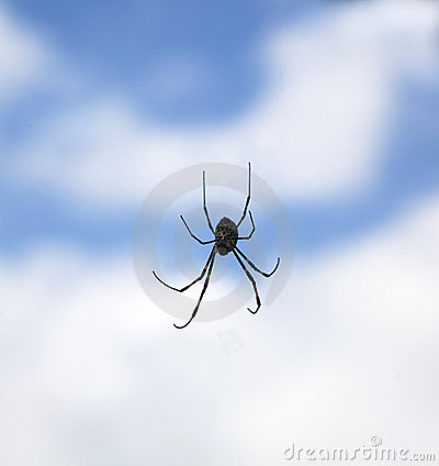Spider in the air