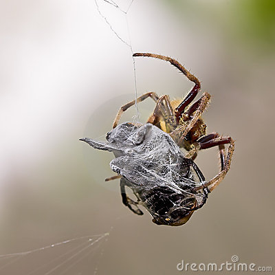 Free Spider At Work Stock Photography - 3875622