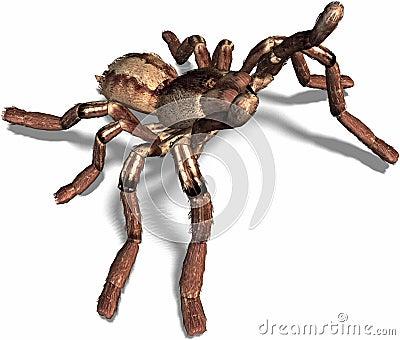 Spider attacks