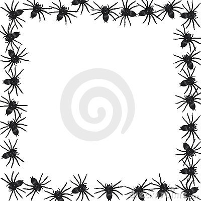 Spider border vector