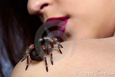 Spider Brachypelma smithi on girl s shoulder