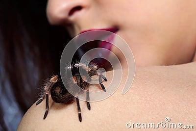 Spider Brachypelma smithi on girl s shoulder
