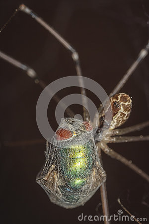 Free Spider Caught A Fly In The Network And Sucking Stock Photo - 40549690