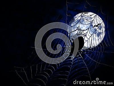 Spider on dark background