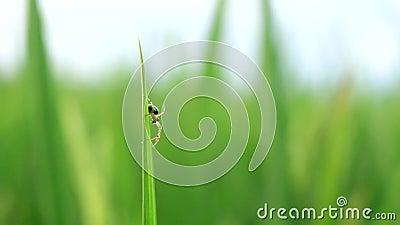 Spider in de wind stock video
