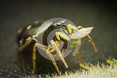 Spider eats his prey