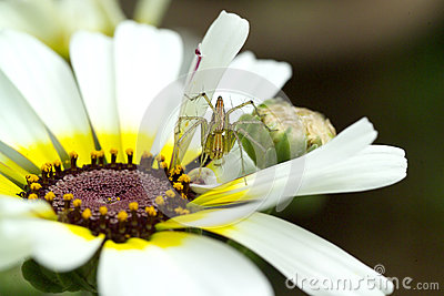 Spider on a flower