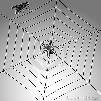 Spider Fly And Web Royalty Free Stock Photos - Image: 19551488