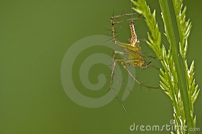Spider and Grass