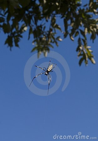 Free Spider Hanging From A Tree Stock Photos - 8004713