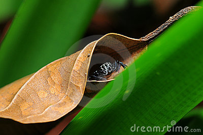 A spider hiding underneath a leaf