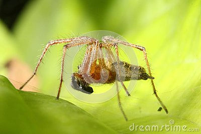 Spider hunt