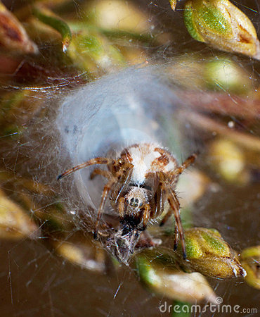Spider and its nest