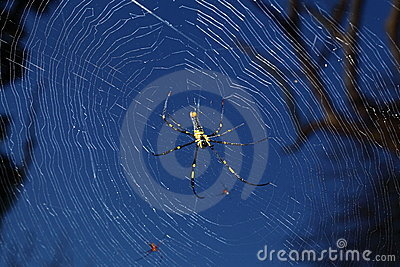 Spider in its web