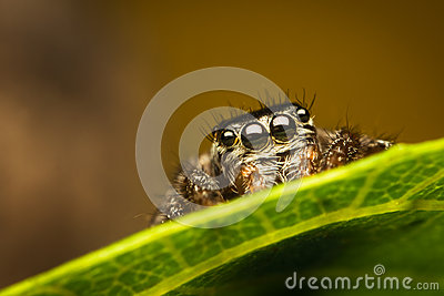 Spider on leaf
