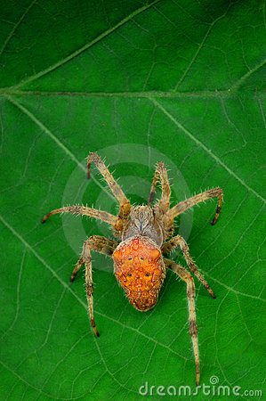 Spider on a leaf