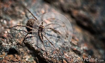 Spider Macro1