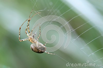 Spider making its web