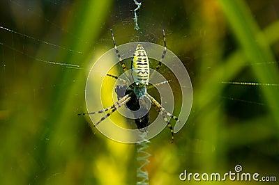 Spider (Mass break)