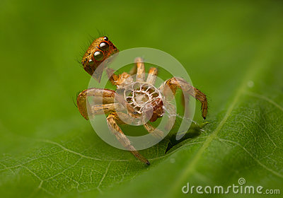Spider molt Stock Photo