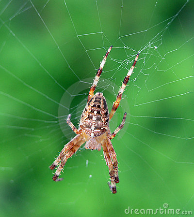 Spider n Web