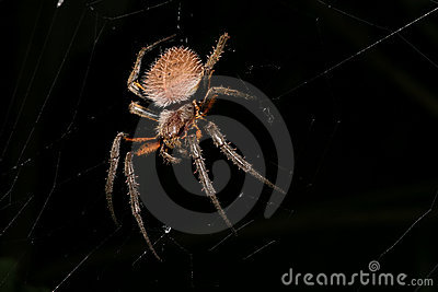 Spider at night hairy and scary animal
