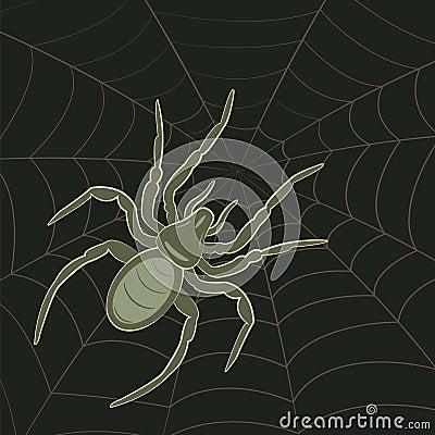 Free Spider On Web Stock Photos - 24326553