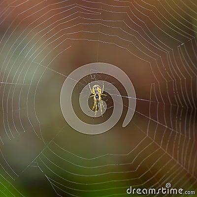 Spider outdoor