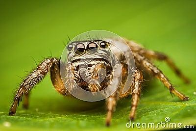 Spider portrait