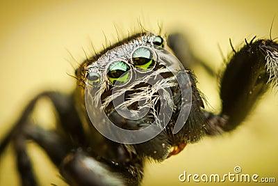 Spiders eye details