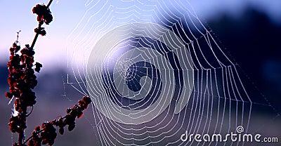 Spider s Web