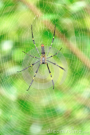 Spider with its web