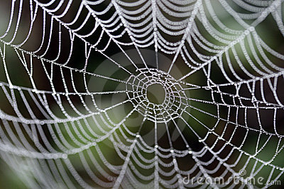 A spider s web