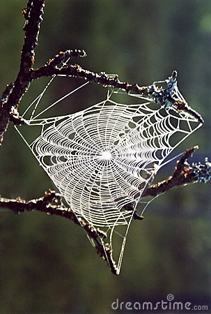 Free Spider S Web Royalty Free Stock Photography - 591577