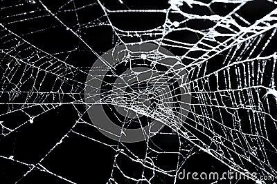 Spider s web on black