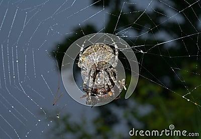 Spider on spider-web 10
