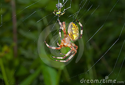 Spider on spider-web 19