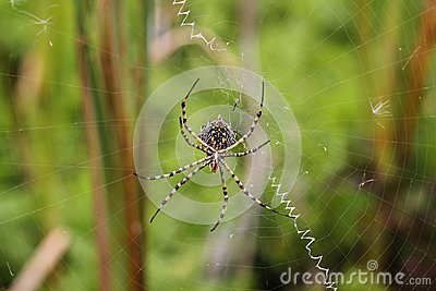 Spider on a spiderweb
