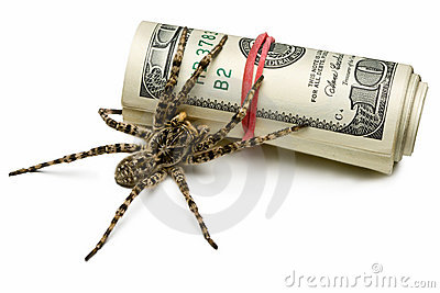 Spider stand guard of cash isolated on white