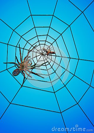 The spider succeed in catching food