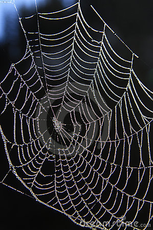 Free Spider Web Stock Photo - 15369440