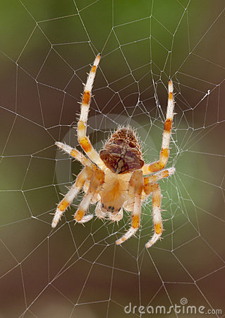 Free Spider & Web Royalty Free Stock Photo - 19995925