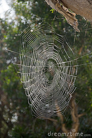 Free Spider Web Royalty Free Stock Photos - 21905908