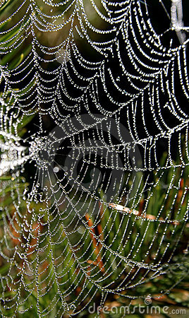 Free Spider-Web Royalty Free Stock Photo - 364965