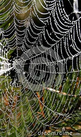 Free Spider-Web Royalty Free Stock Photo - 364965