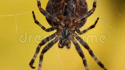 Spider in web with prey - photo#26