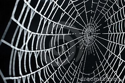 A Spider Web With Dew Drops