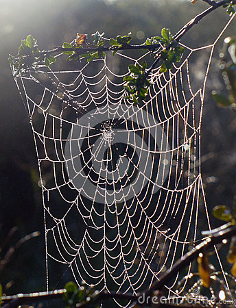 Spider web in dew and sun rays